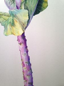 cabbage_stem